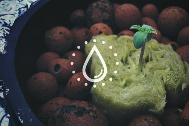How To Clean And Reuse The Water From Your Hydroponic System