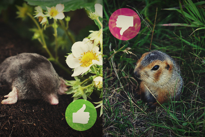 Gophers, Moles, And Your Outdoor Cannabis Garden