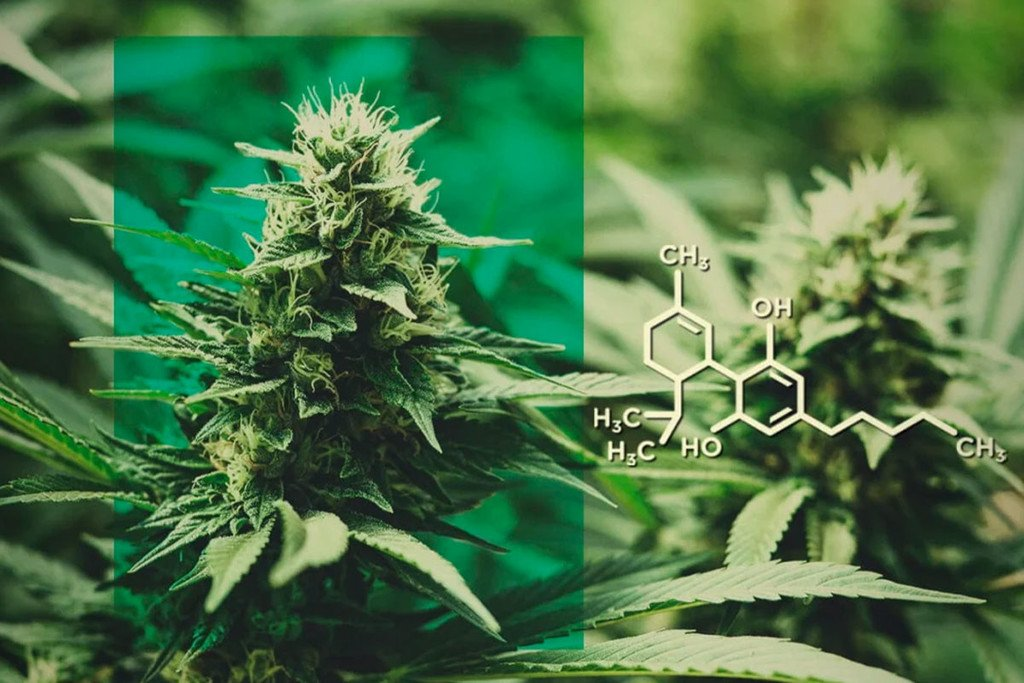 CBD Flowers: Dose CBD Without The THC - RQS Blog