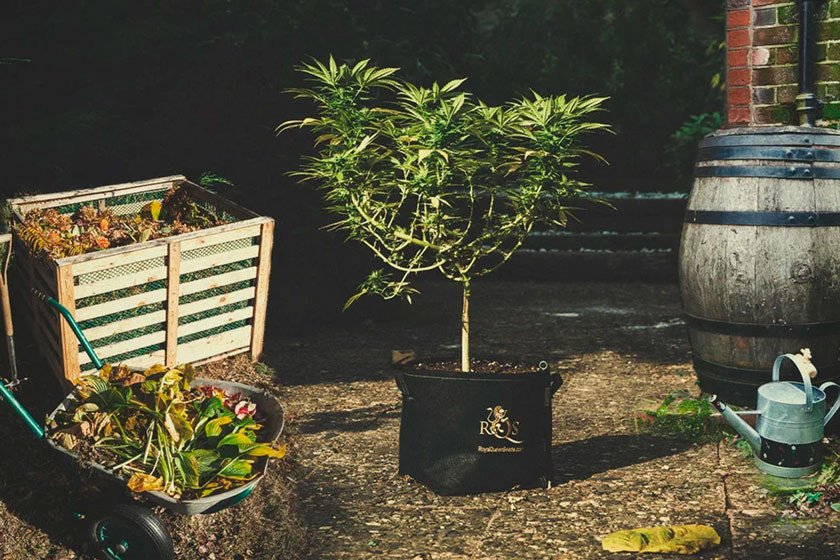 Growing Cannabis With Sustainable Practices