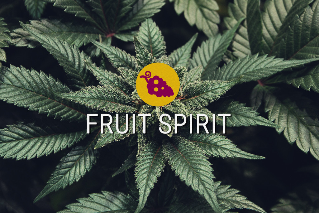 Fruit Spirit Feminized Cannabis seeds