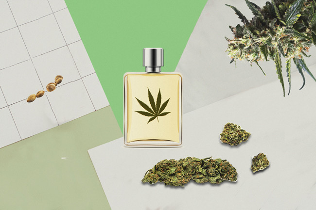 What Is Cannabis Perfume, And How Is It Made? - RQS Blog
