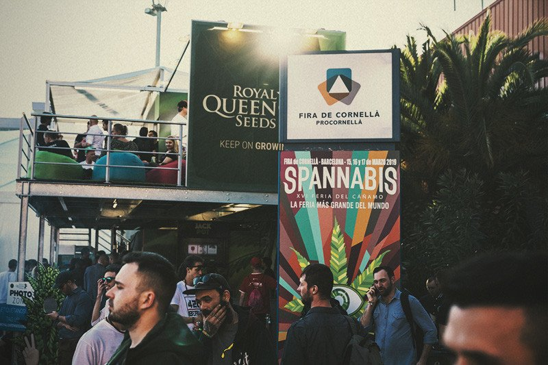 Best Seed Banks 2020 Spannabis 2019: Royal Queen Seeds wins Best Seedbank!   RQS Blog