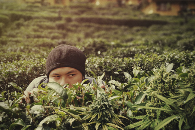 Tips To Help Protect Your Cannabis Plant From Thieves