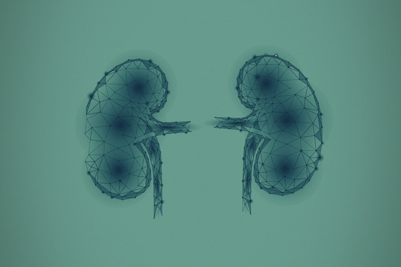 Can Cannabinoids Treat Kidney Diseases?