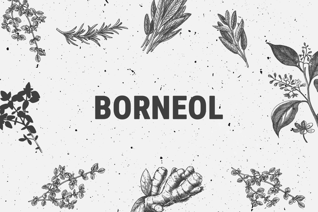 Borneol Terpene: Hated By Insects, Loved By Humans