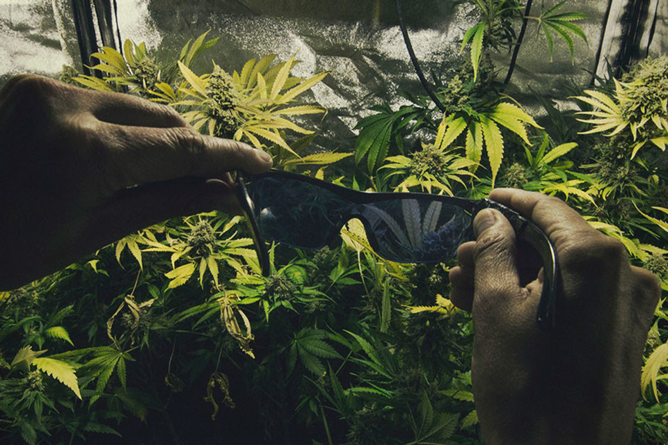 The Importance Of Protecting Your Eyes In A Cannabis Grow Room
