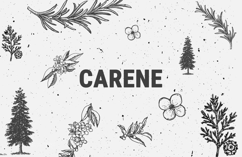 Carene: A Unique Terpene With Anti-Inflammatory & Bone-Healing Properties