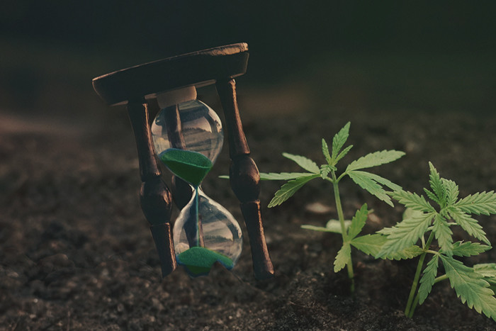 Time-Saving Tips For Cannabis Growers With A Busy Schedule