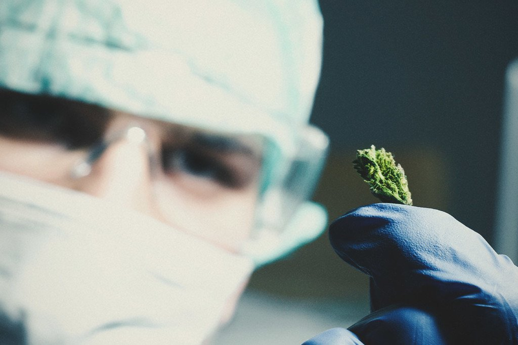 Does smoking weed prevent cancer?