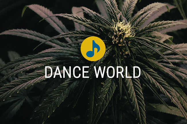 Dance World Medical Cannabis Seeds