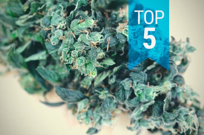 Top 5 High-CBD Strains