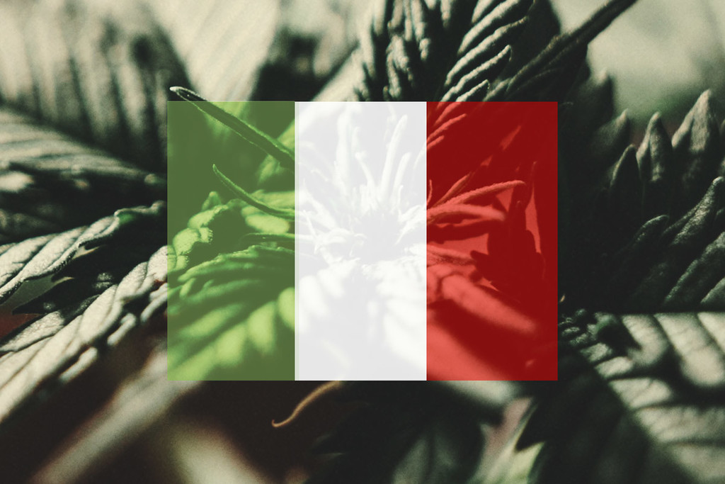 How To Grow Cannabis Outdoors In Italy: Month By Month