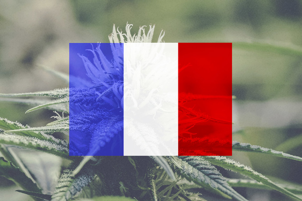 Growing Cannabis Outdoors In France: A Month-By-Month Guide