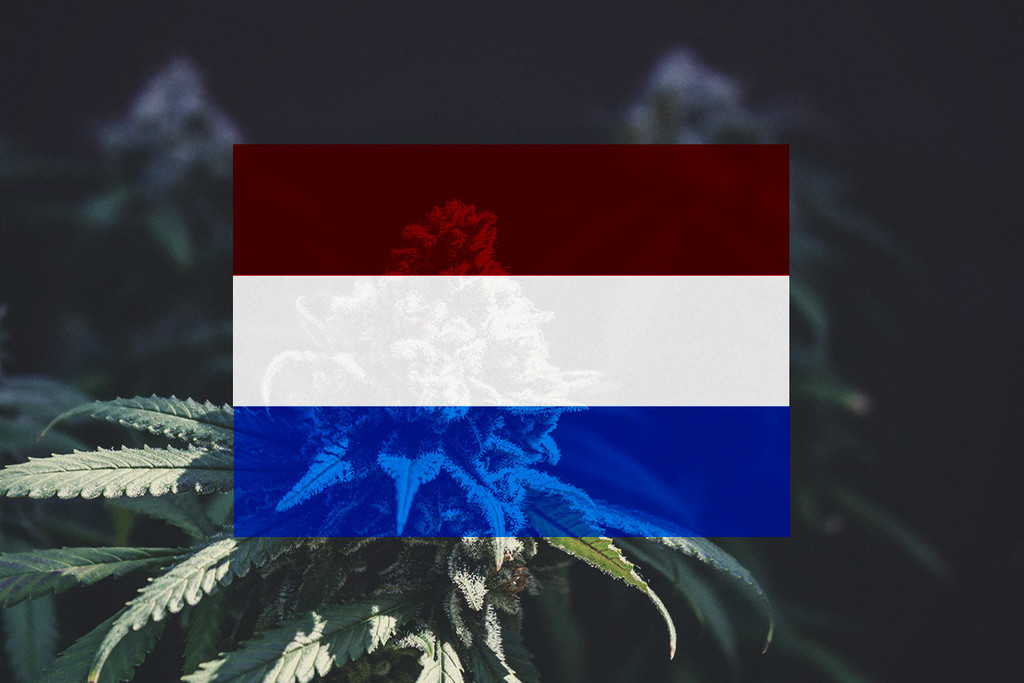 Growing Cannabis Outdoors In The Netherlands: Month-By-Month Guide