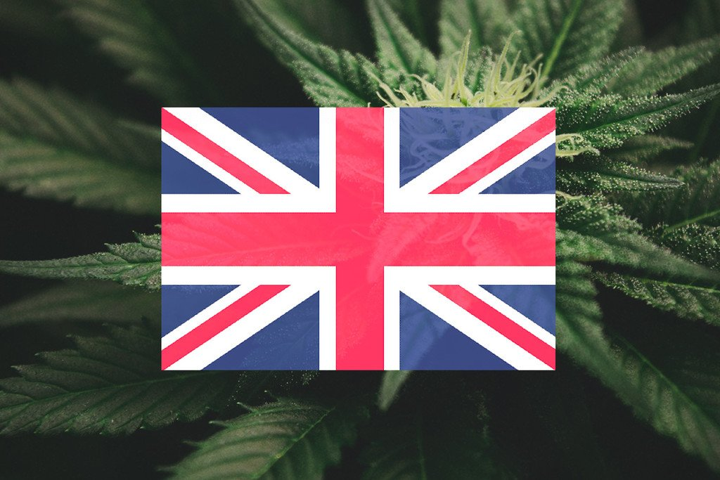 Growing Cannabis Outdoors In The UK: Month-By-Month Guide