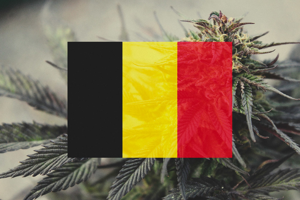 Growing Cannabis Outdoors In Belgium: Month-By-Month Guide