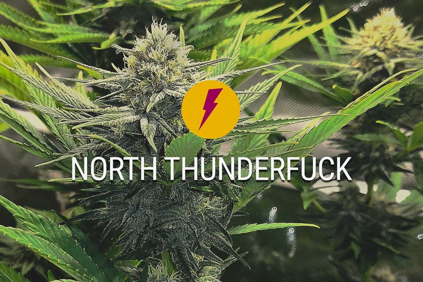 North Thunderfuck: New And Improved Version Of MTF