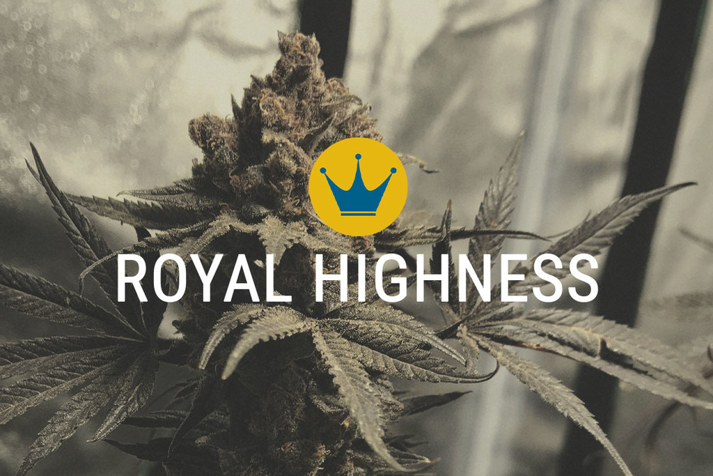 Royal Highness: CBD and THC in Harmony