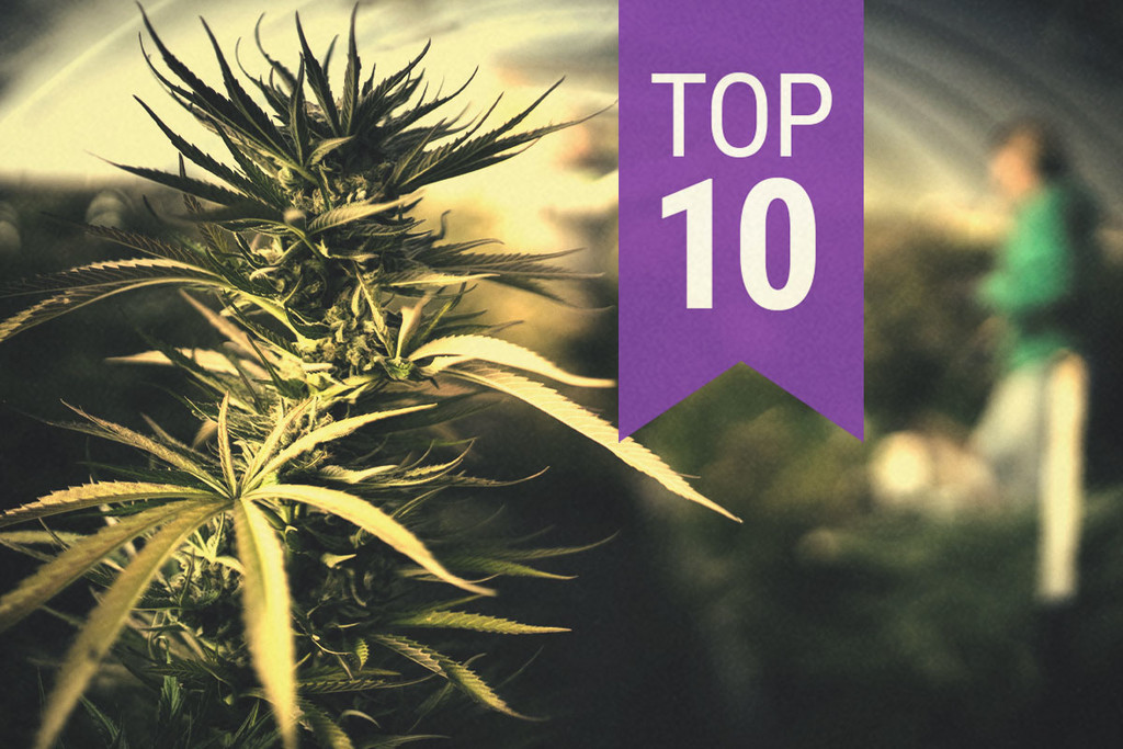 Top 10 most popular Autoflowering Marijuana Strains 2015