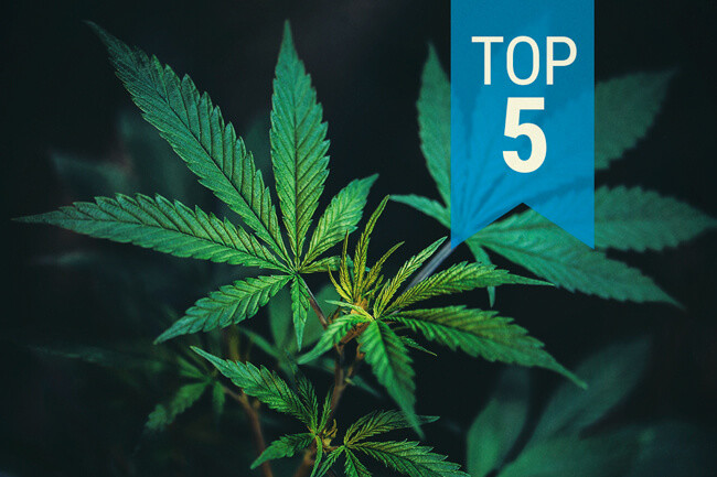 Top 5 Most Popular CBD Cannabis Strains 2015