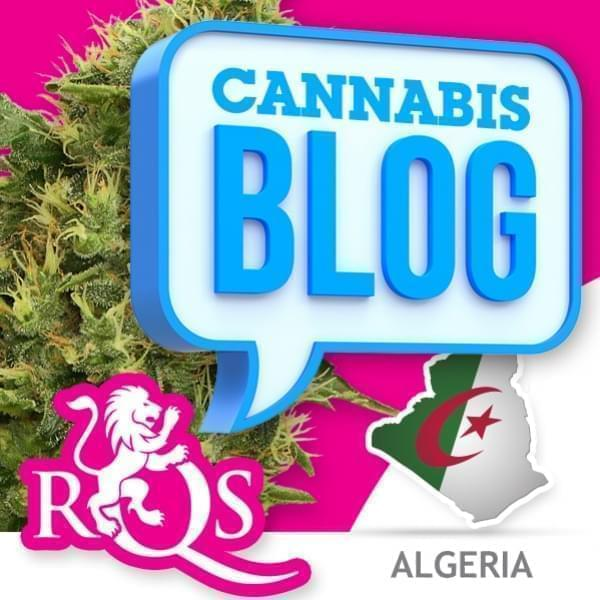 Cannabis in Algeria