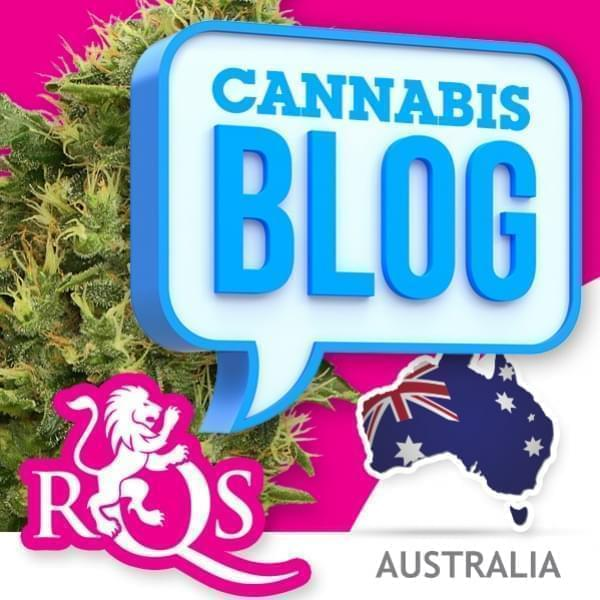 Cannabis in Australia