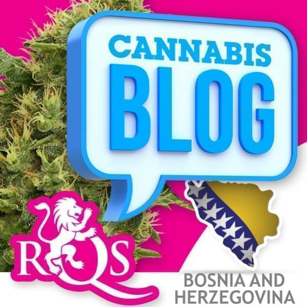 Cannabis in Bosnia and Herzegovina