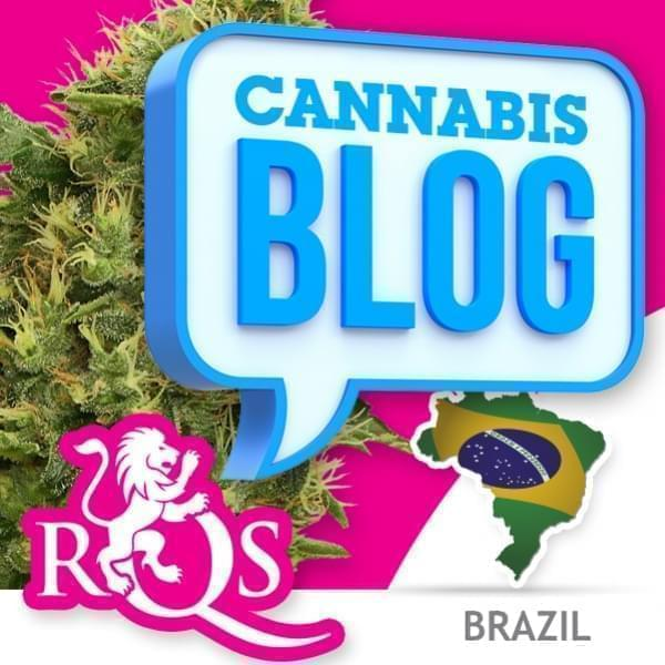 Cannabis in Brazil