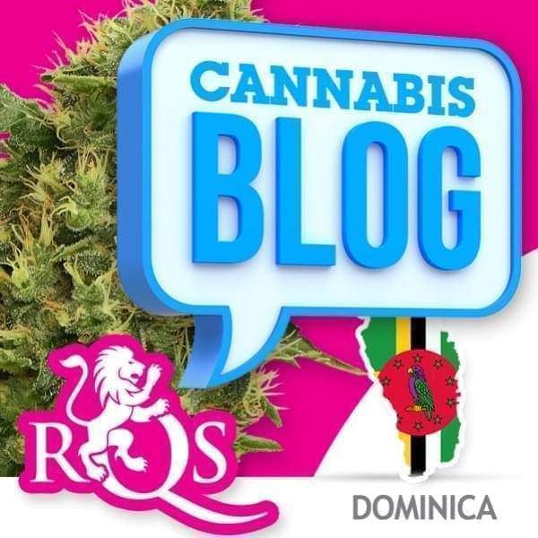 Cannabis in Dominica