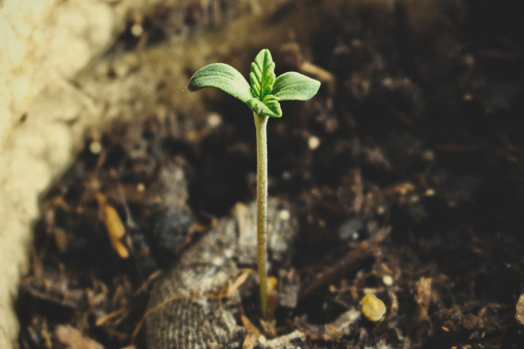 Rookie Guide: 3 Steps to Master the Seedling Stage