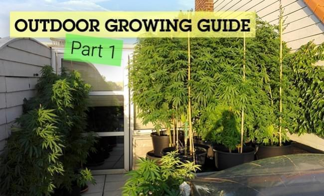 The Basics of Cannabis Outdoor Growing (Part 1)