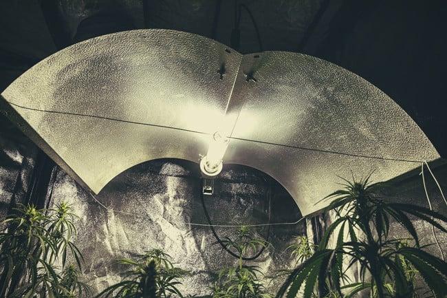 I diversi tipi di luci per la coltivazione della cannabis pro e