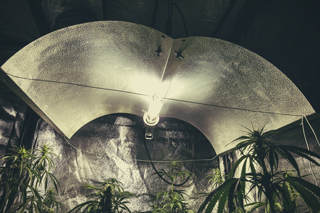 The Different Types of Lights for Cannabis: Pros and Cons