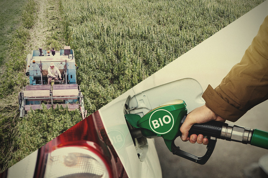 Hemp, an Efficient Biofuel Waiting Its Moment