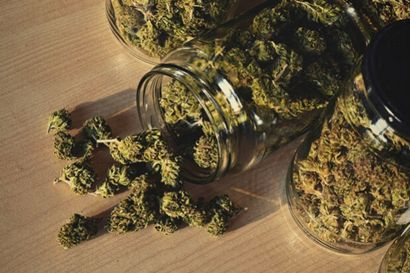 How to Cure Your Cannabis Buds