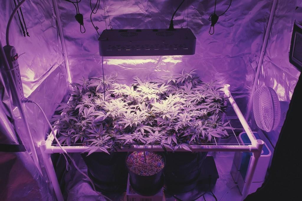 Лампы для веги марихуаны конопля балашиха