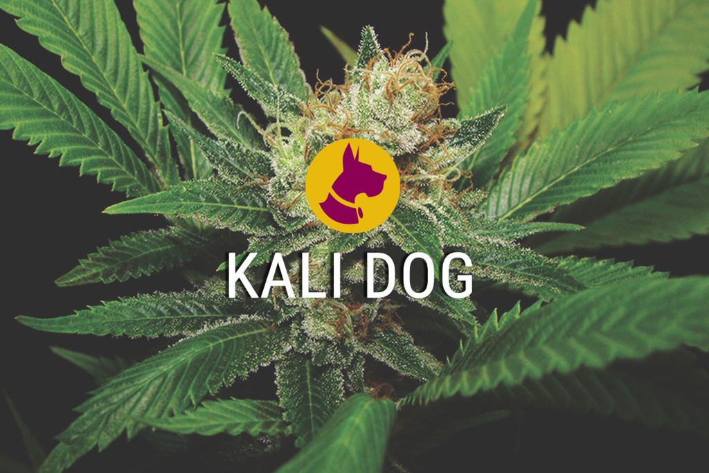 Kali Dog, a Royal Chemdawg
