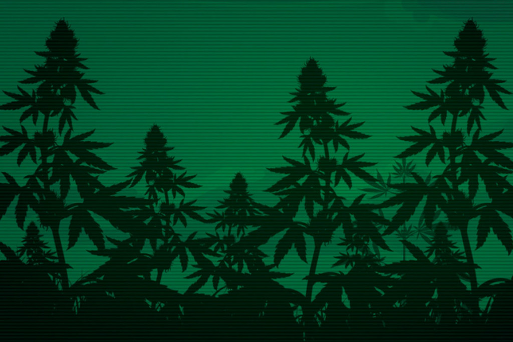 Can Cannabis Increase Night Vision?