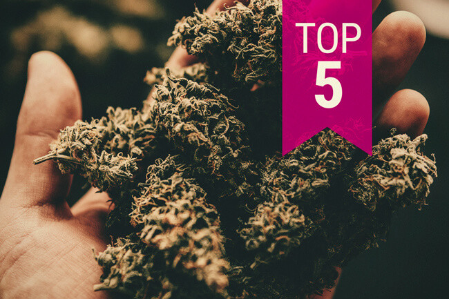 Top 5 Strongest Cannabis Strains