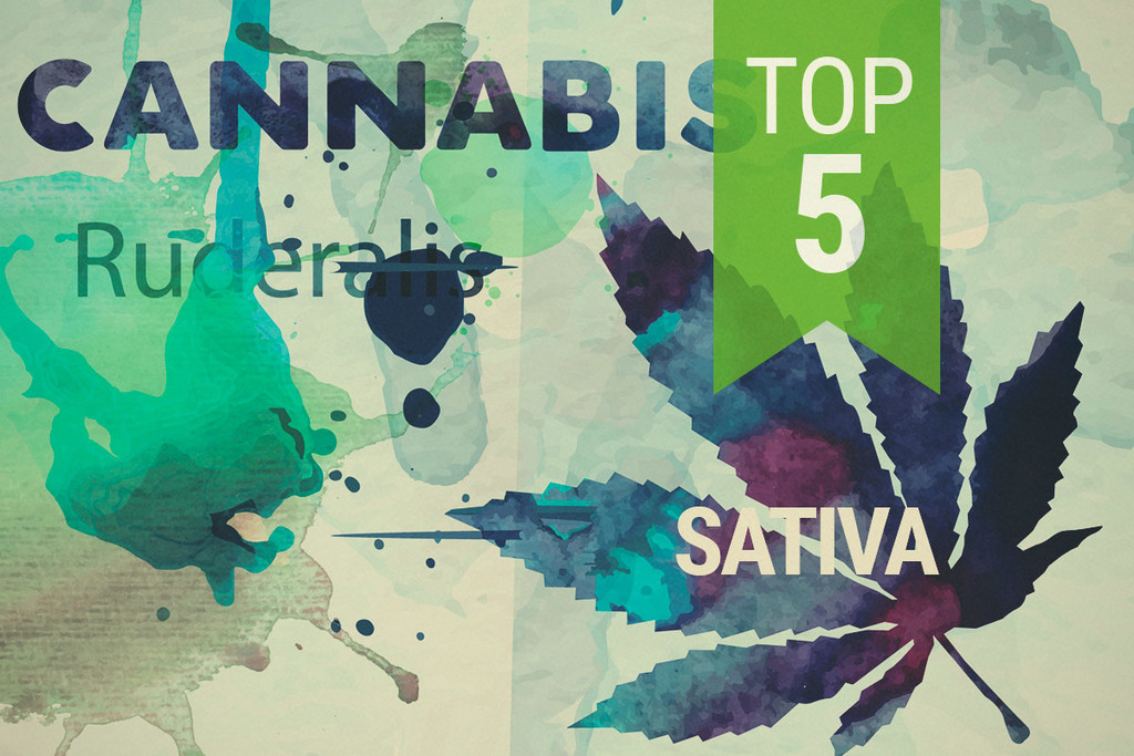 Top 3 Ruderalis Sativa Strains