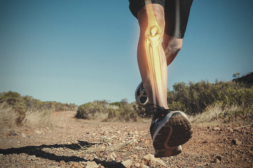Research Finds How Cannabis Supports Bone Health