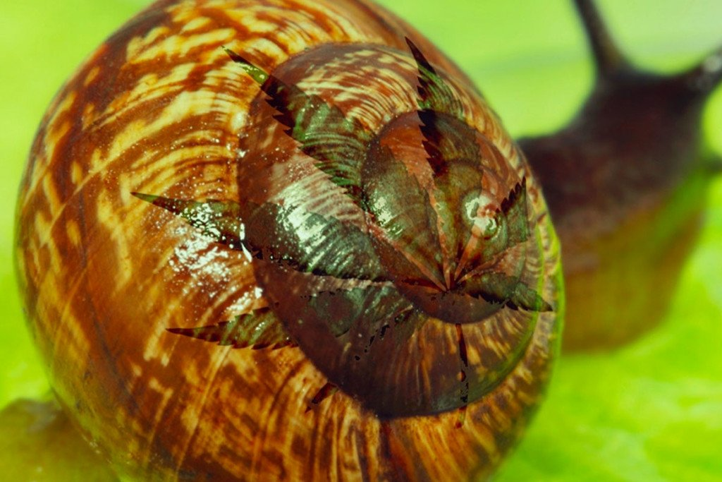 How To Get Rid Of Slugs And Snails
