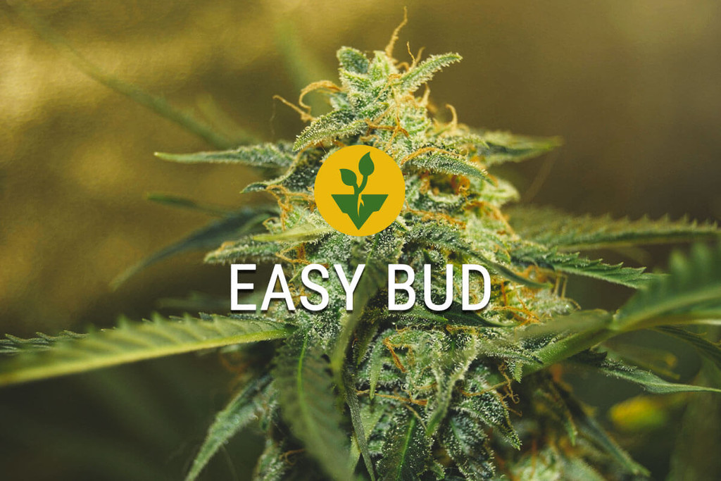Start growing cannabis very easy with the Easy Bud