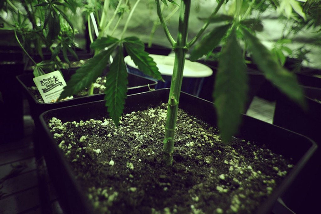 Types Of Containers For Growing Weed - RQS Blog