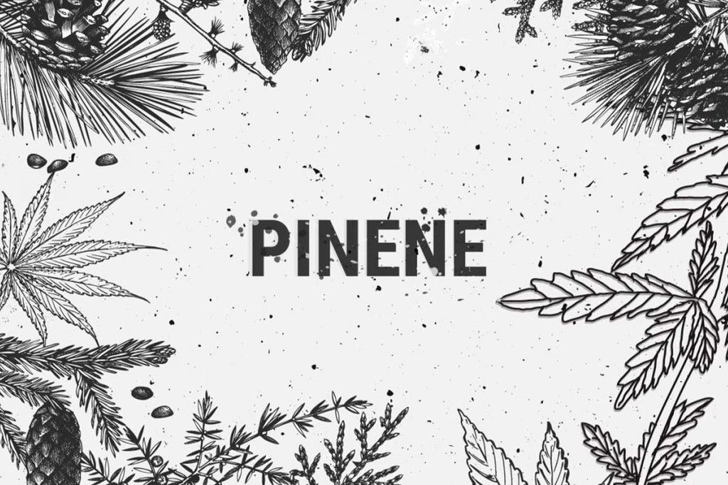 Benefits Of Cannabis Terpene Pinene