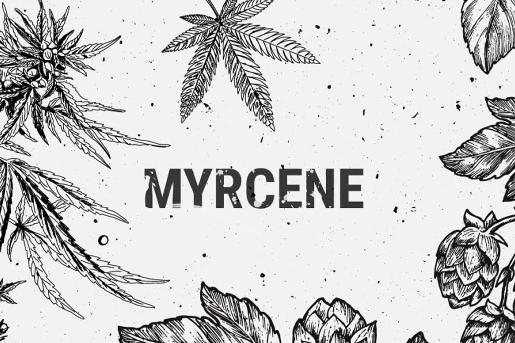 Myrcene: An Abundant Terpene With Surprising Benefits