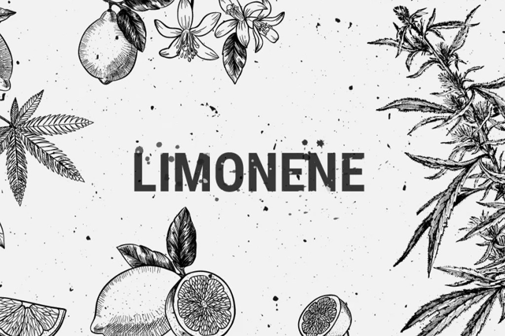 Limonene: A Medical, Recreational And Flavorful Terpene