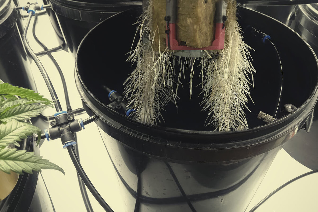 Aeroponics: Using Air To Grow Healthy Cannabis Crops