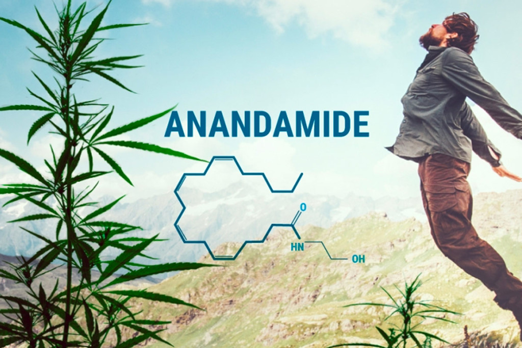 What Is Anandamide And What Role Does It Play In Our Bodies?